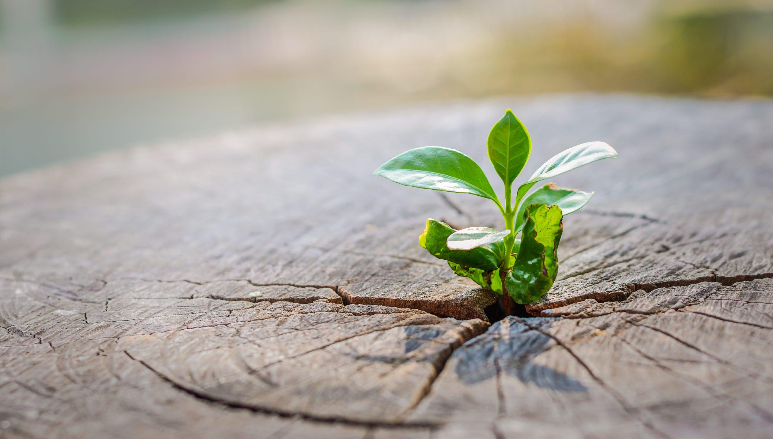 Plant growing in unusual surrounding